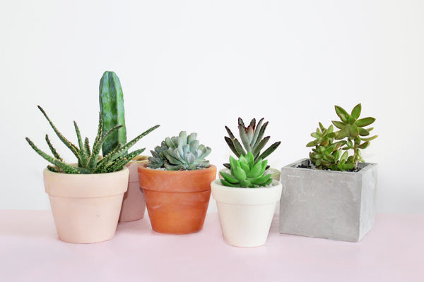 Keep cactus away from other succulents