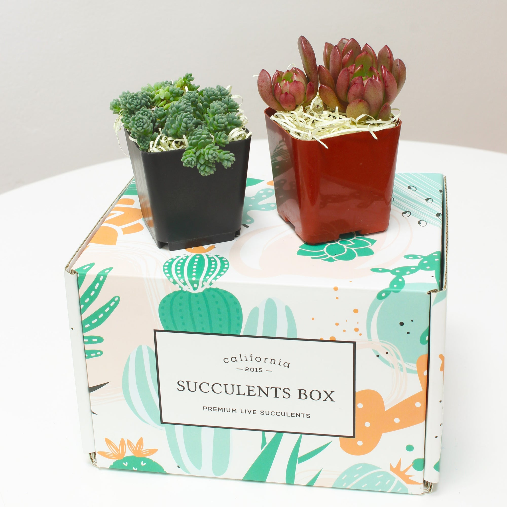 Succulent Subscription Boxes, Succulents Box, Types of Succulent Plants, Succulents for Sale, Succulents in California, Succulents Box with Care Guide