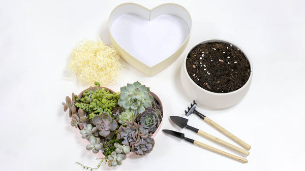 How to DIY a Stunning Succulent Heart for Valentine, How to make a heart for Valentine Gift Decor