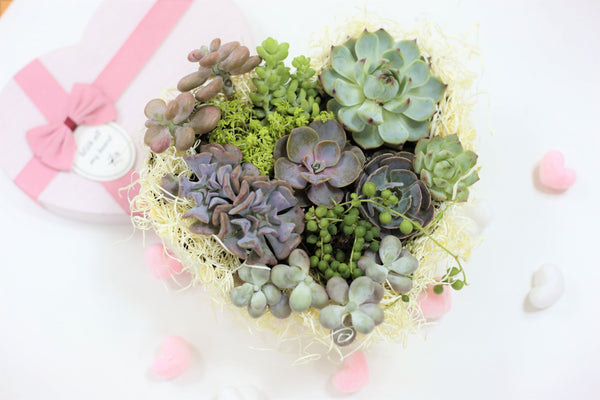 Succulent Heart for Valentine, Valentine Succulent Gift Ideas, Valentine Succulents Decoration, How to DIY a Stunning Succulent Heart for Valentine
