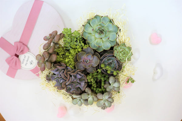 How to DIY a Stunning Succulent Heart for Valentine