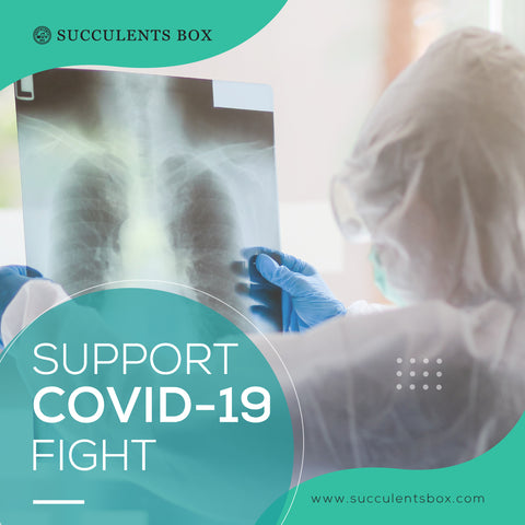 Succulents Box Support COVID-19 Fight CDC Foundation