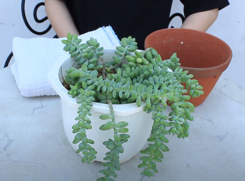 keep how to choose right pots for hanging succulents, succulent healthy, hanging succulents careguide
