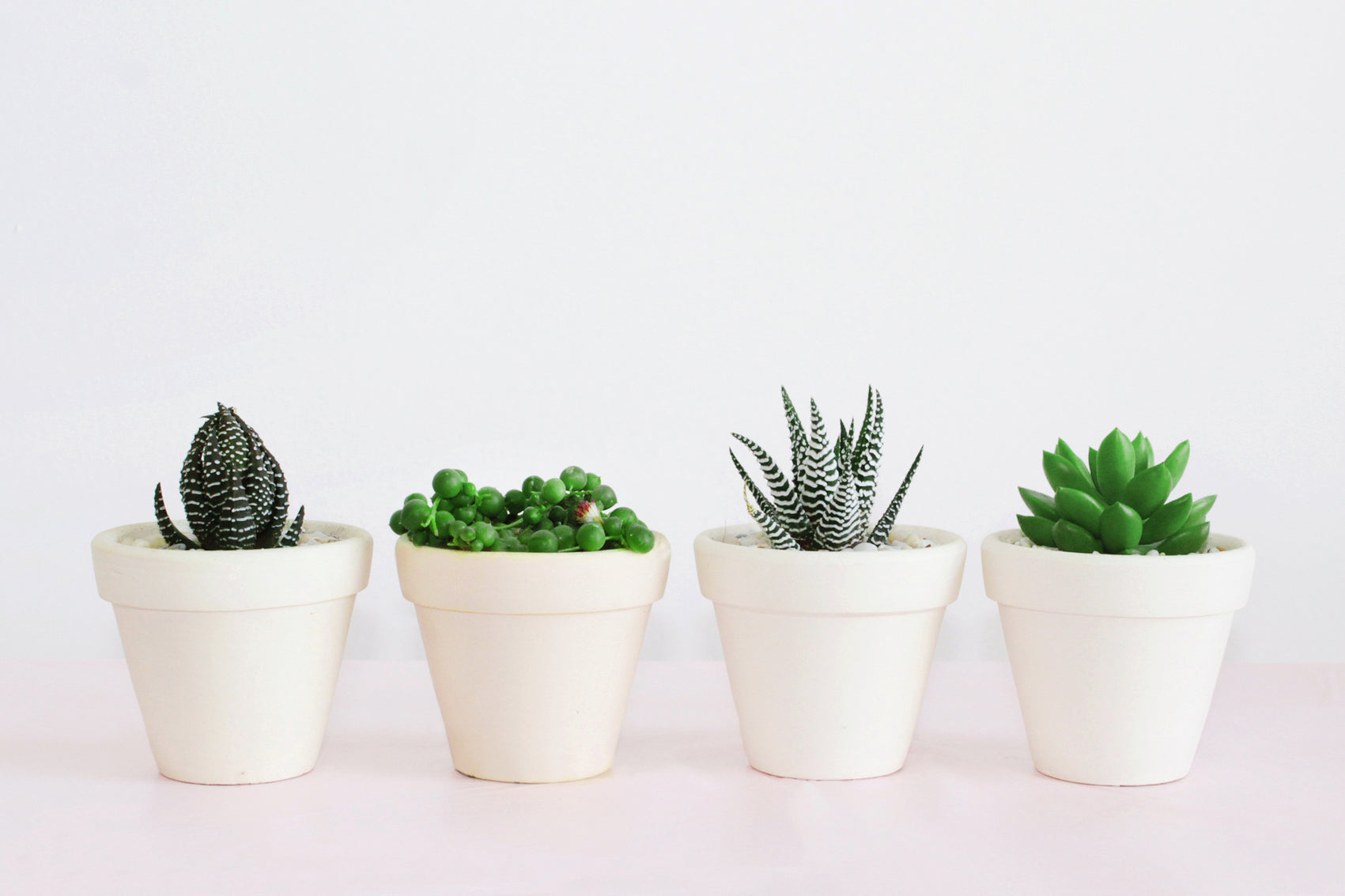 Succulent Subscription Boxes, Succulents for Sale, Succulents Box with Care Guide, Types of Colorful Succulents, Succulents and Cactus