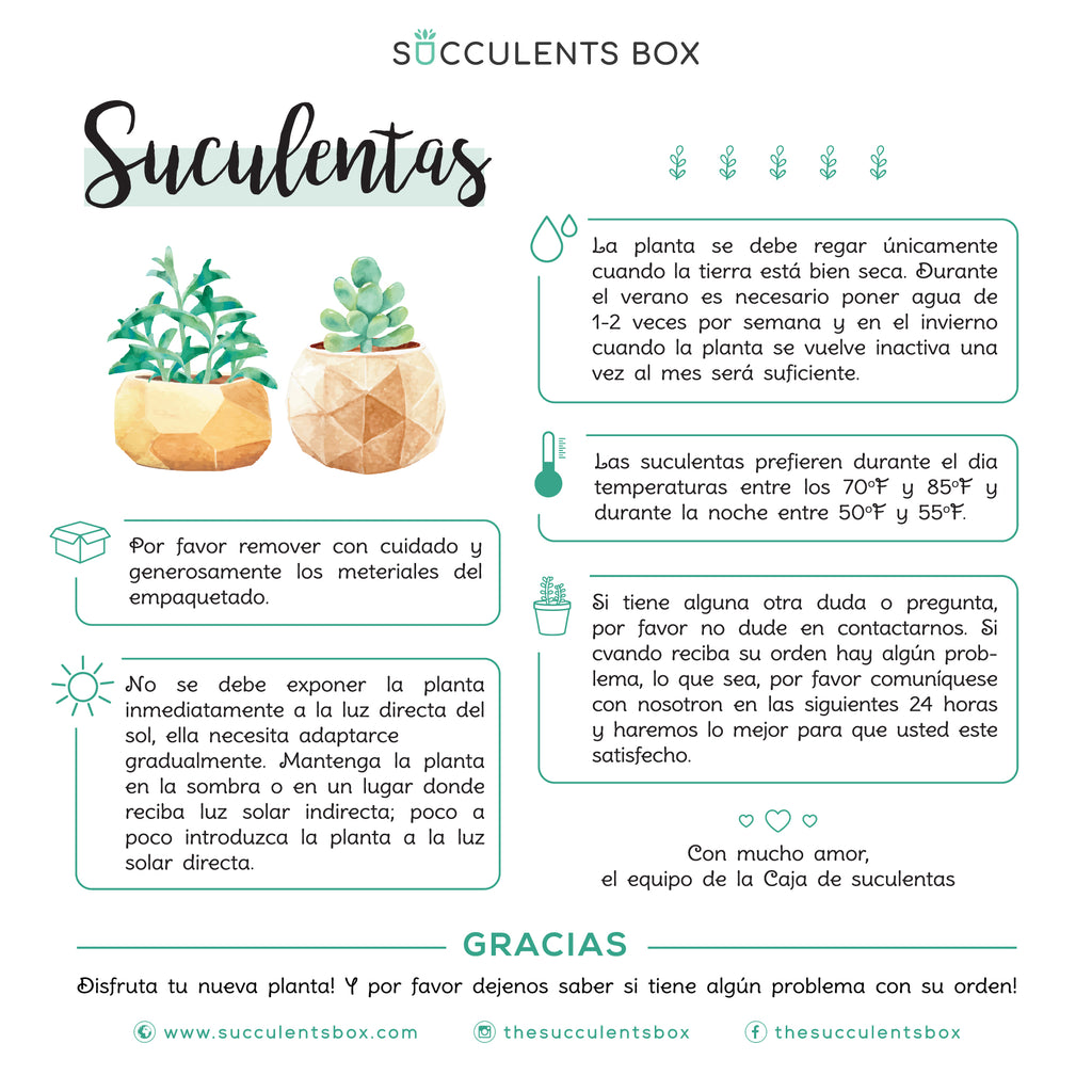 Succulent Care Guide in Spanish, Tips for Growing Healthy Succulents, How to care for succulent plants