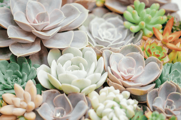 Water Conservation with Succulents