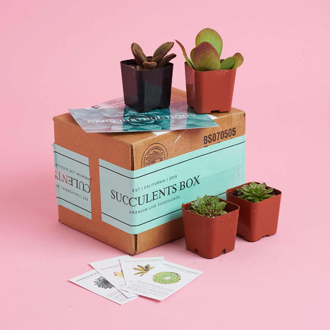 Plant Mail Succulent Box Shipping Packaging