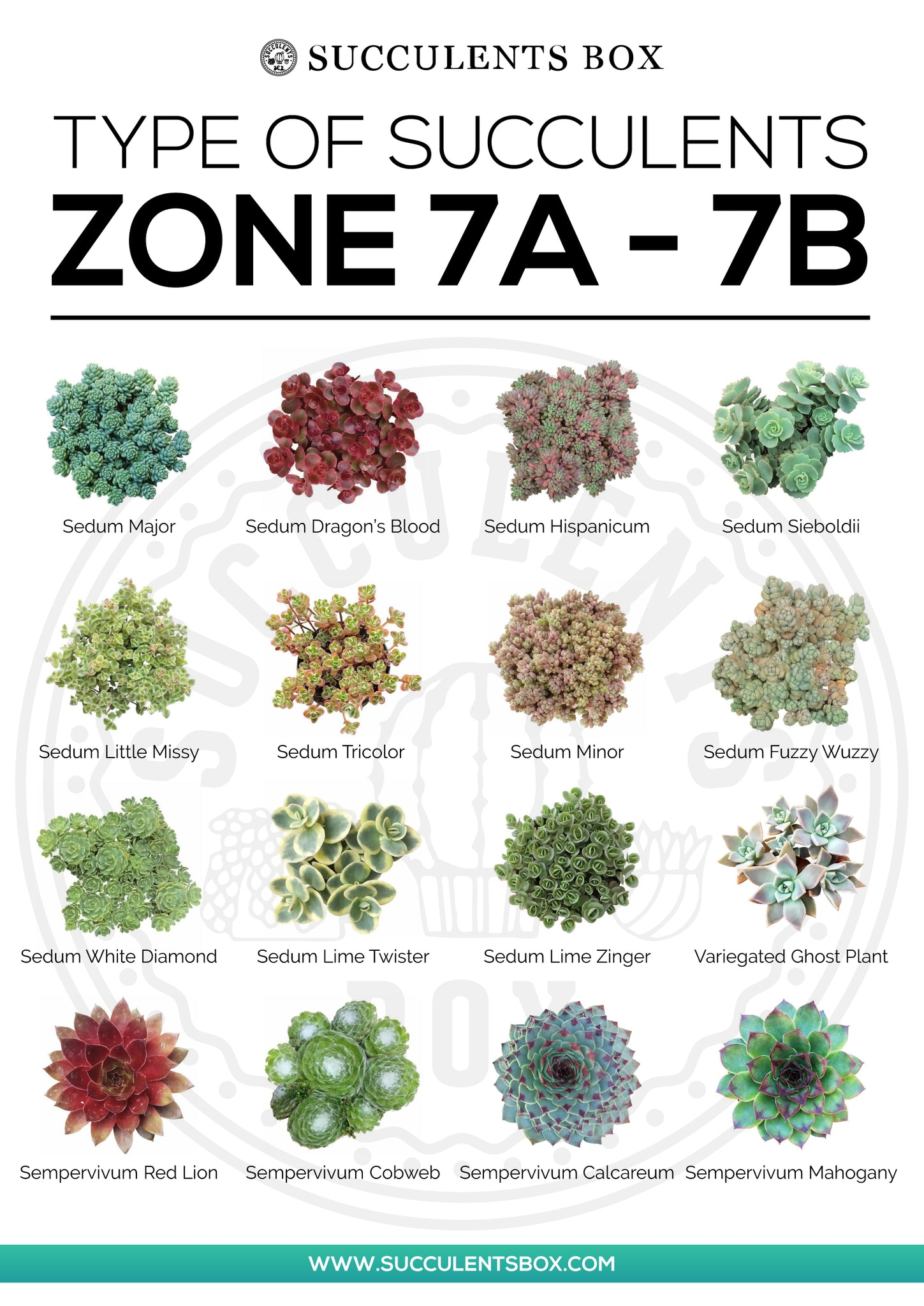 Types of Succulents Zone