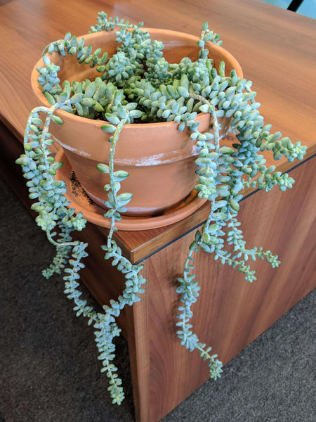 Moving fragile succulents