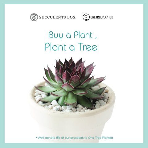 Succulents Box Giving Back - One Tree Planted