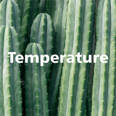 Temperatures for succulents