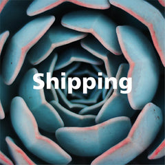 Shipping Succulents