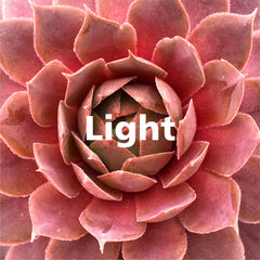 Light for Succulents