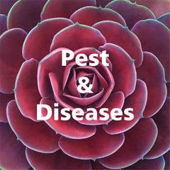 pests diseases succulents