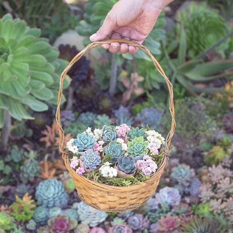 How to make a Succulent Easter Basket, Easter succulent arrangements