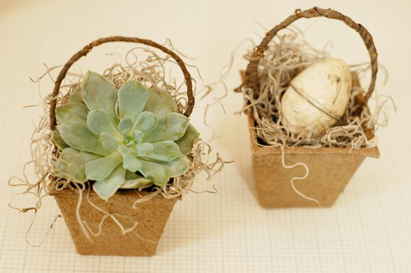 Succulent Easter Basket for a house warming gift, Home Decoration Ideas