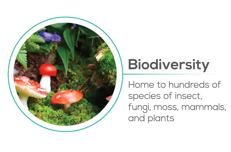 Planting trees help Biodiversity - home to hundreds of species of insect, fungi, moss, mammals, and plants