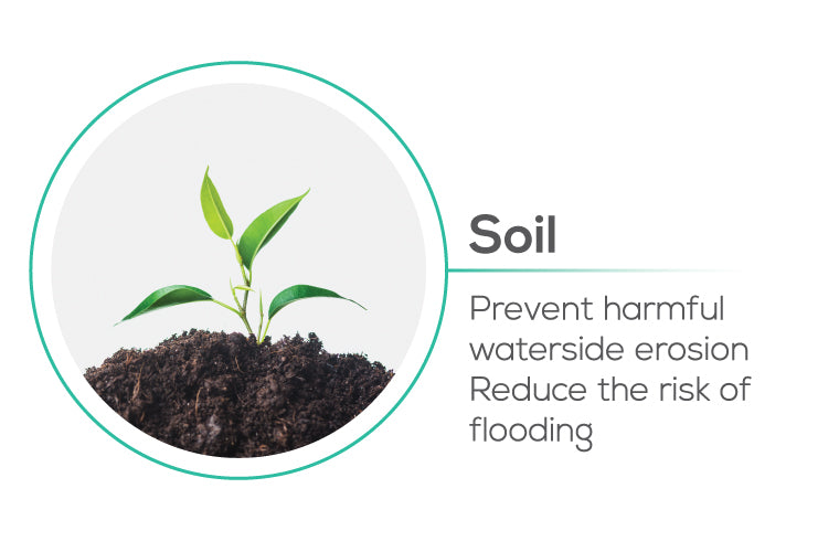 Planting trees help Soil prevents harmful waterside erosion, reduces the risk of flooding