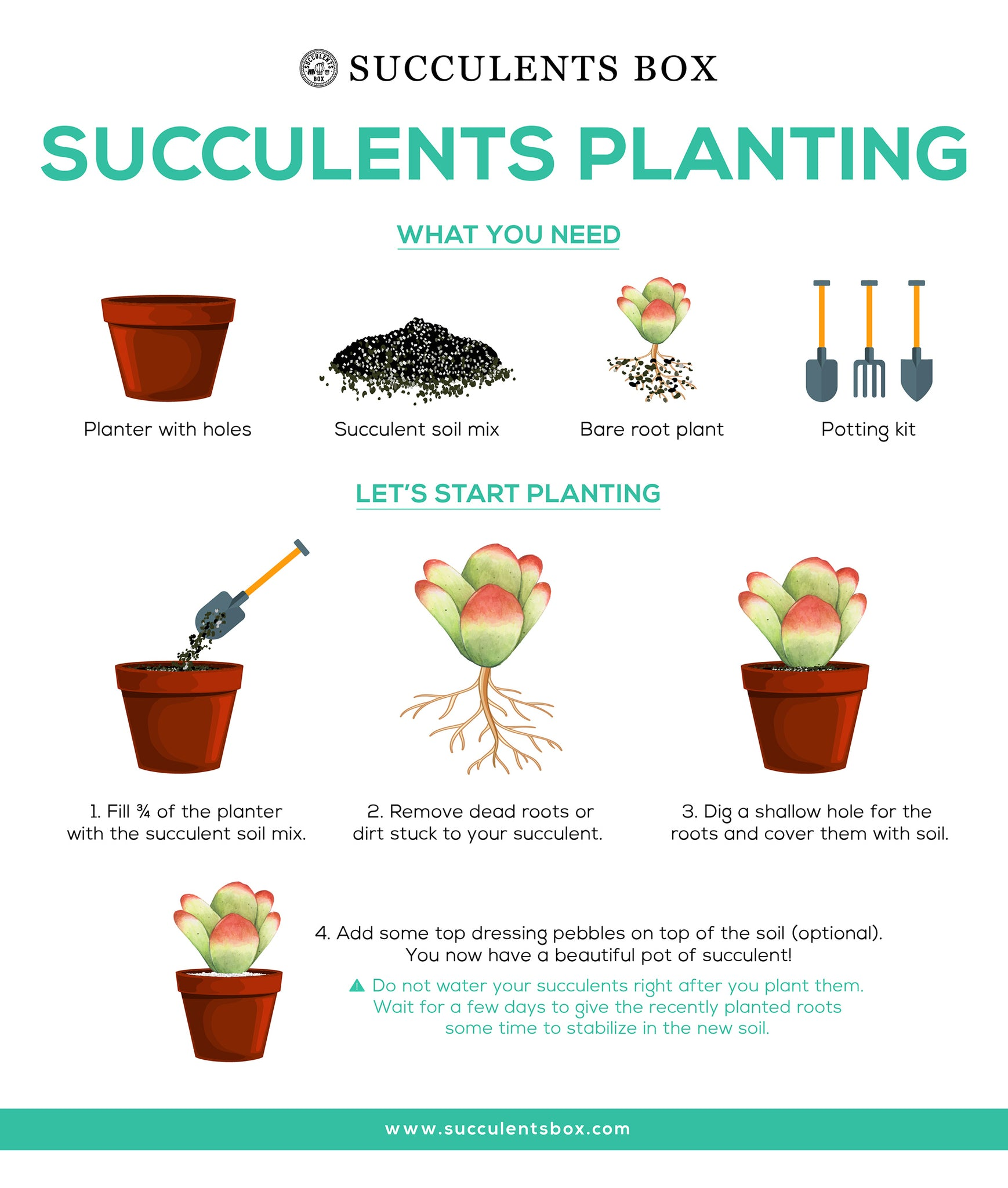 Planting Succulents With The Soil And Containers Succulents Box
