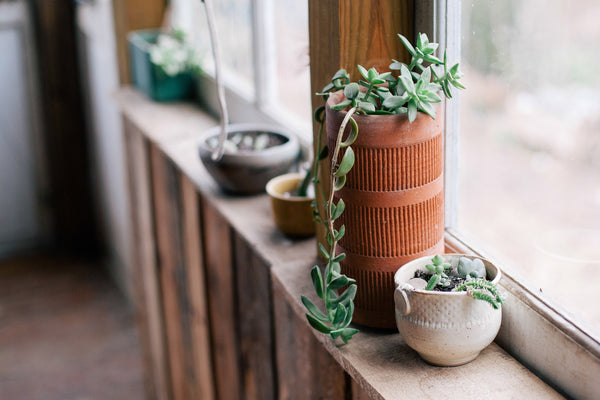 Winter Care Guide for Succulents - Moving Succulents Inside