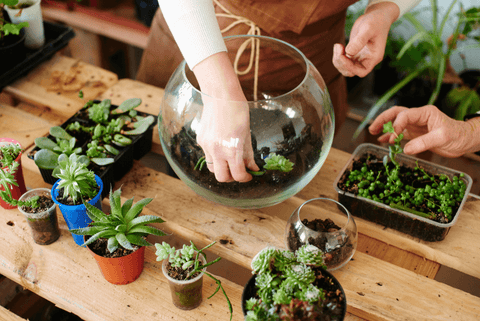 Choosing the Right Size Pot for Your Succulents