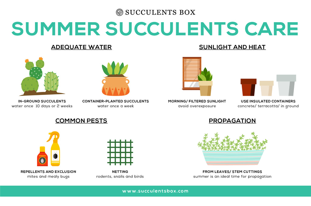 How to care for succulents in the summer - Summer Succulent Care