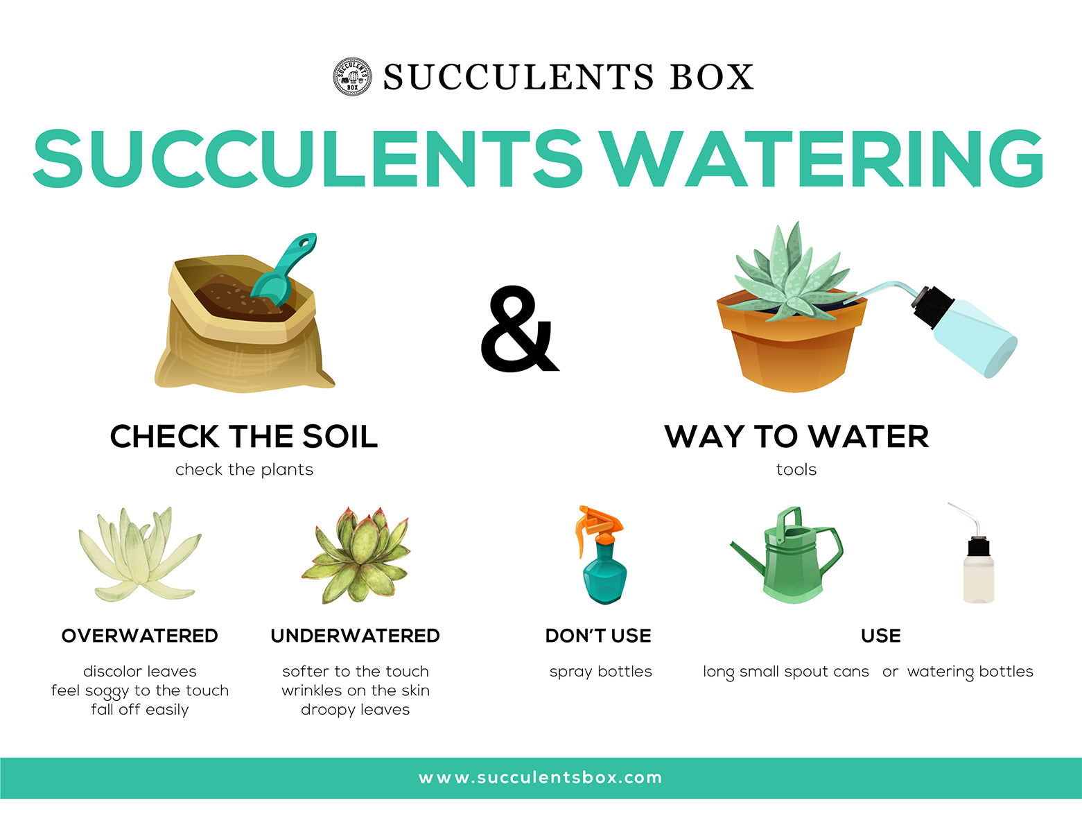 Succulents Watering