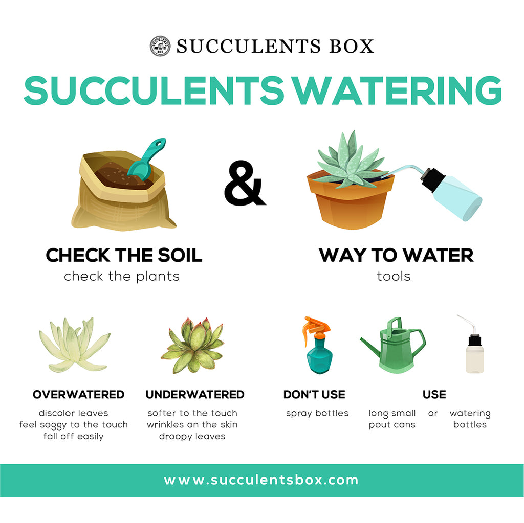 How Not to Overwater or Underwater Your Succulents Complete