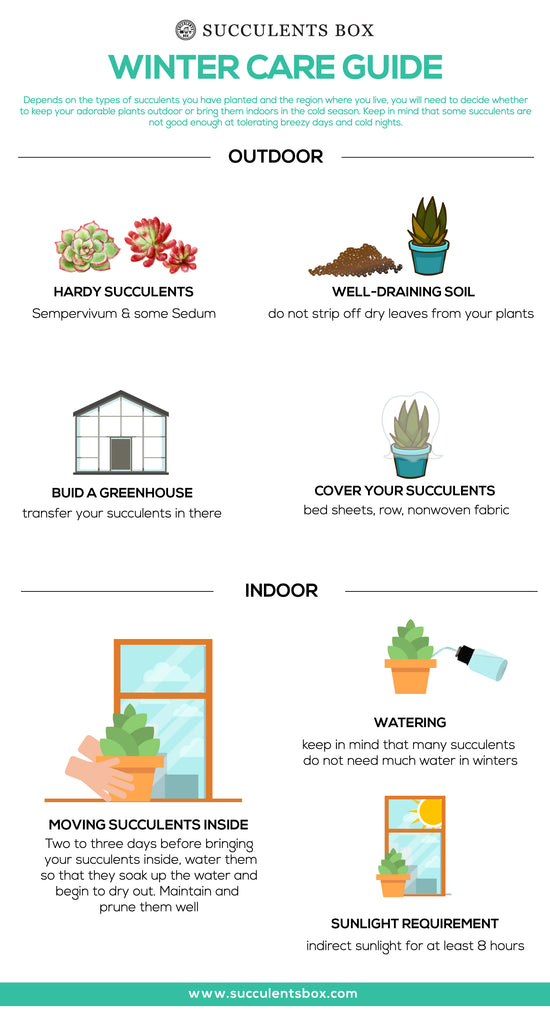 Winter care guide for indoor and outdoor succulents