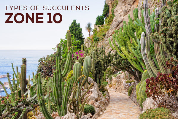 Types of Succulents for Zone 10