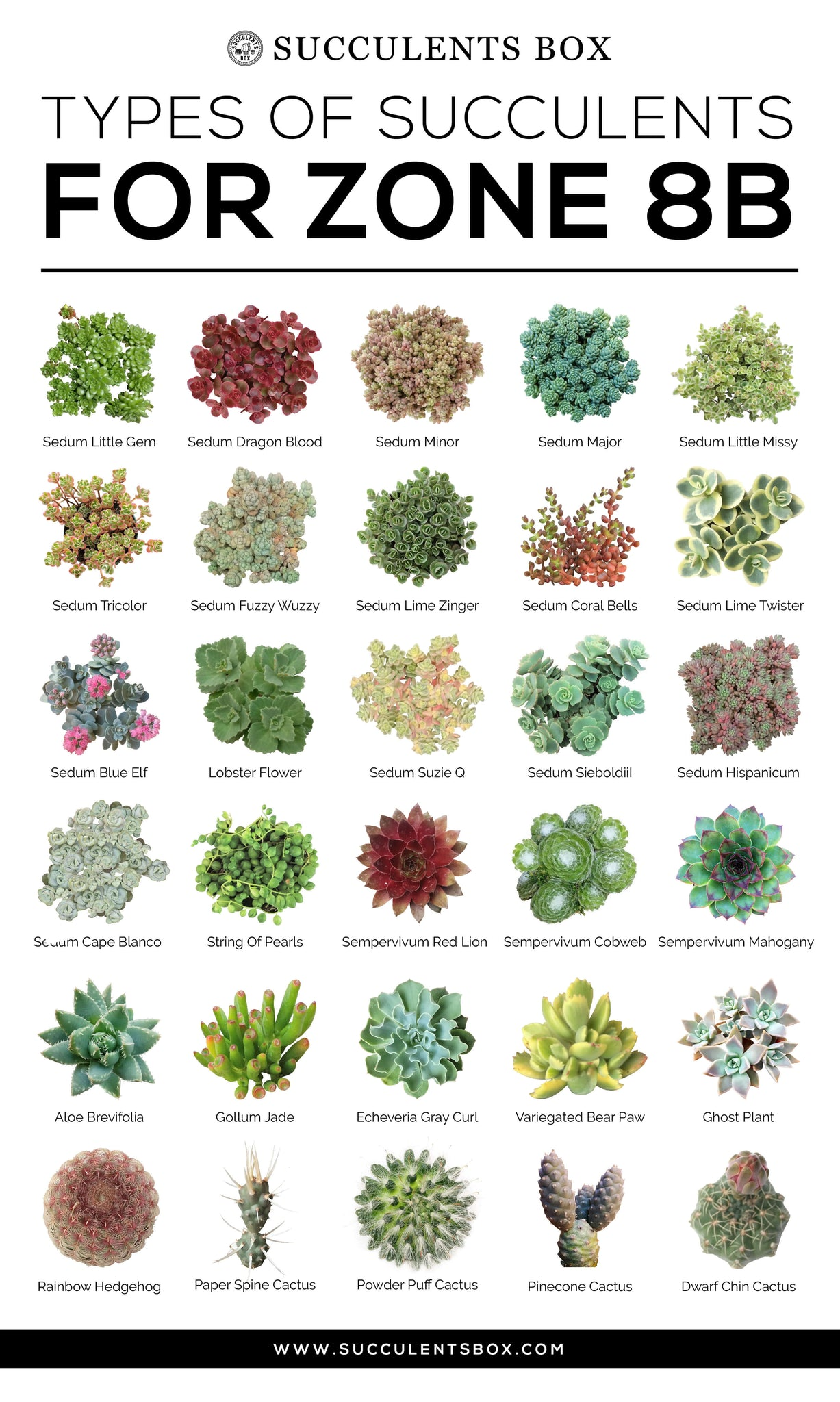 Types of Succulents for Zone