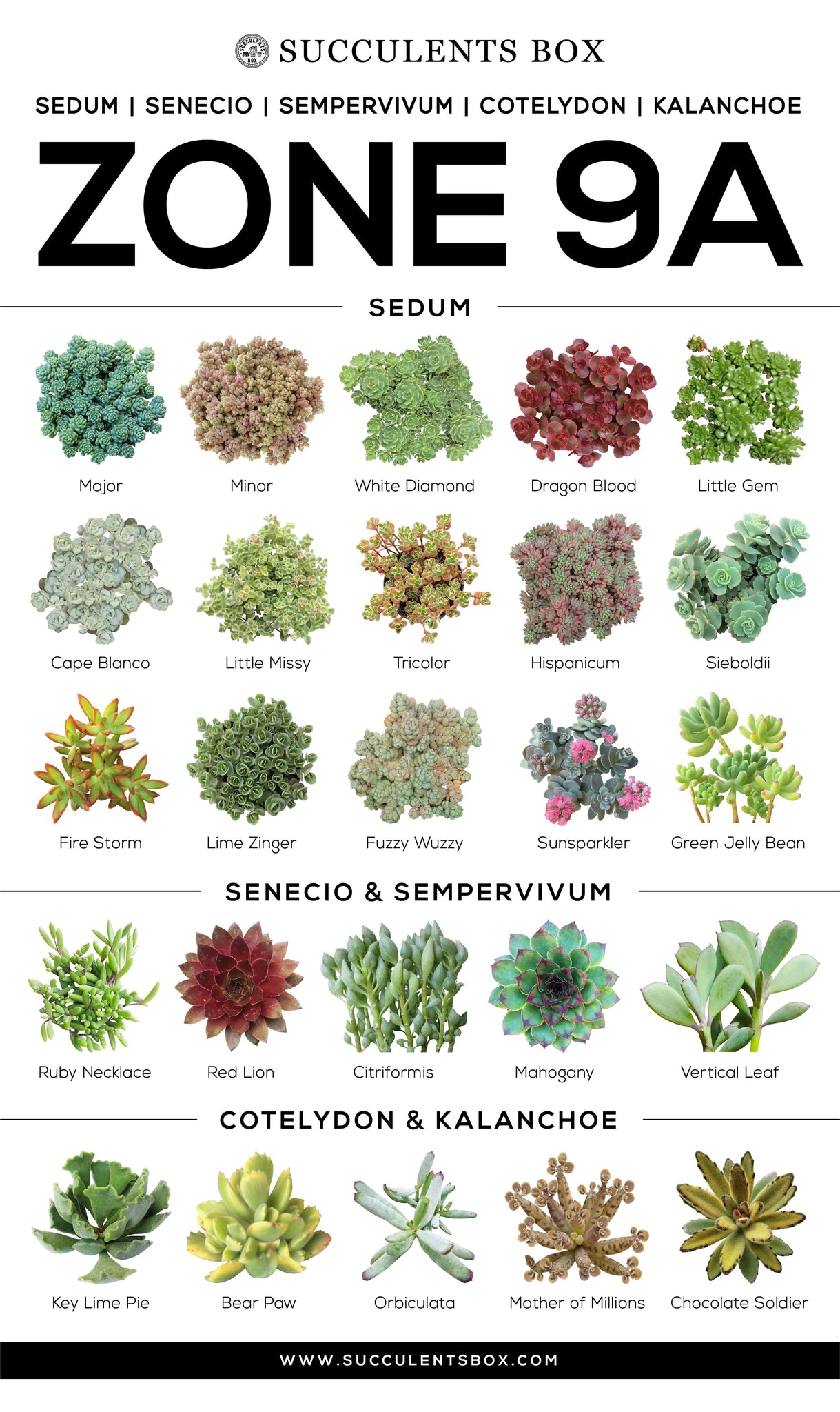 Types of Succulents Zone 9a