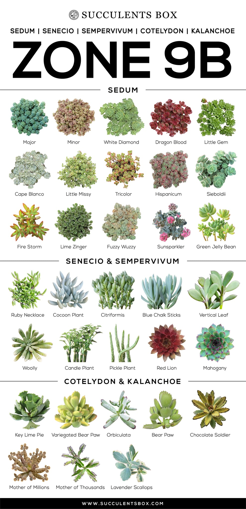 List of Succulents in Zone 9b