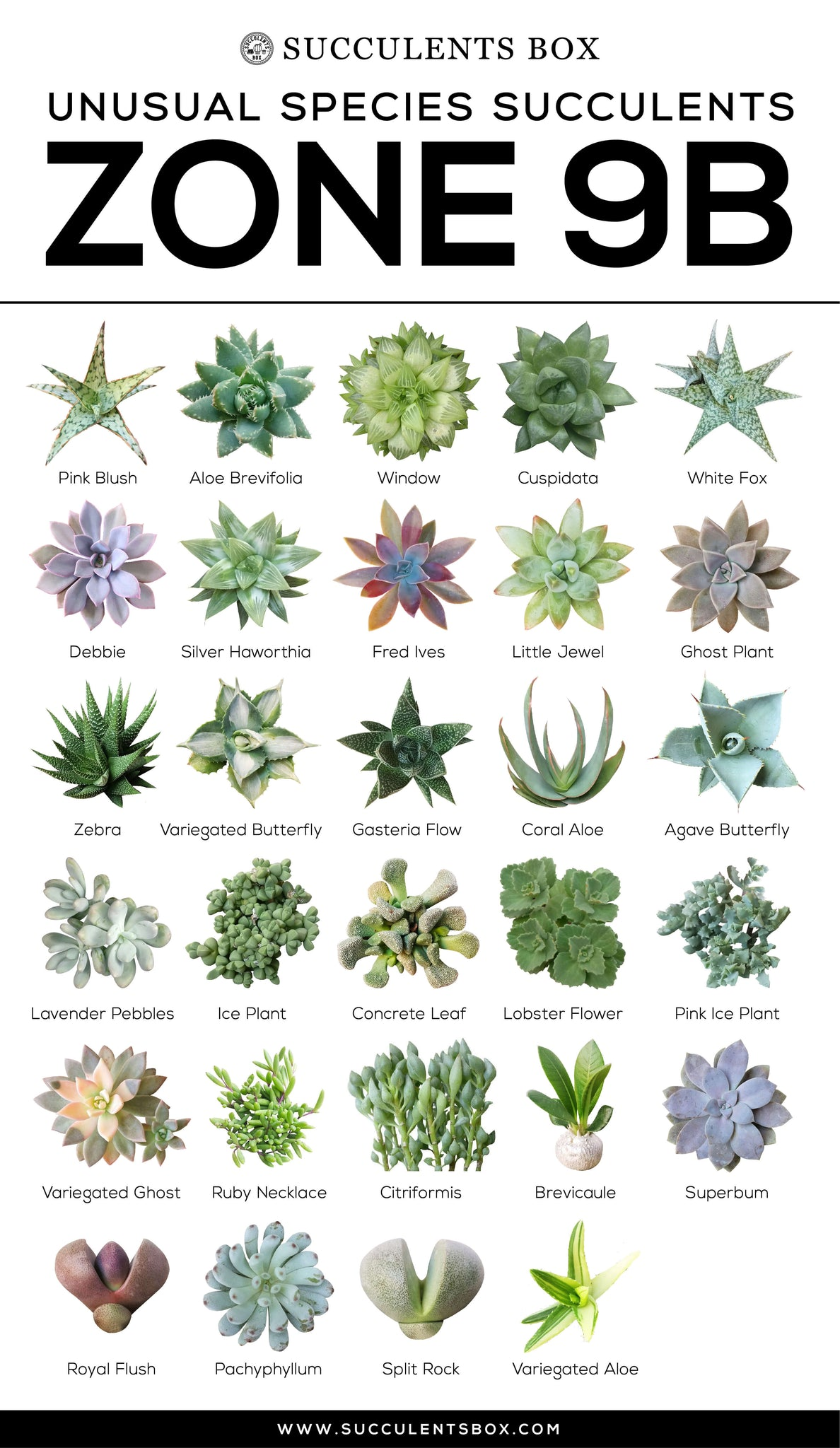 Types of Succulents Zone 9b