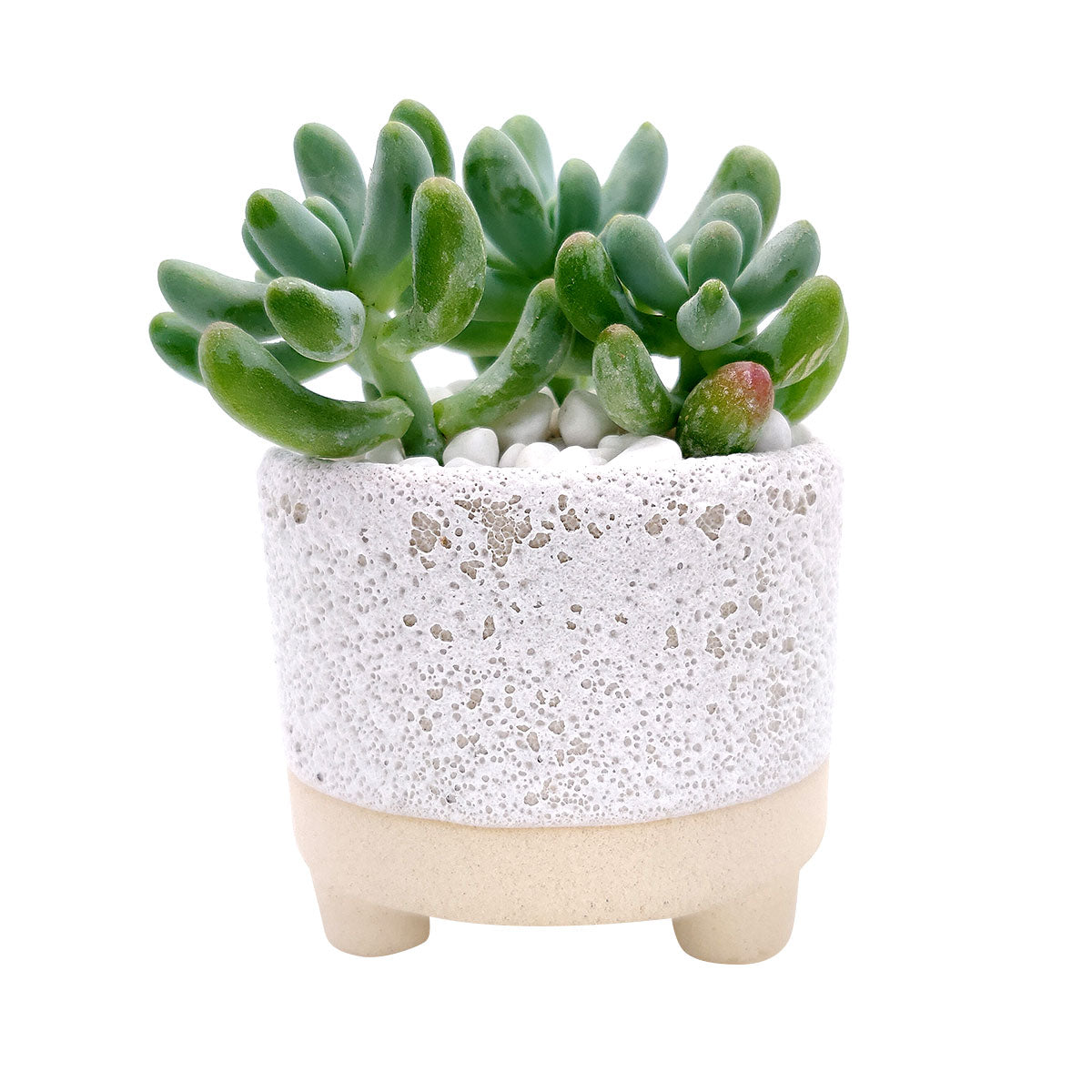 2 inch Bubbled Ceramic Footed Pot for sale, Mini pot for succulent, Succulent pot decor ideas, 2 inch size pot for succulents, Flower pot for sale, ceramic pots for planting