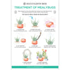 Treatment of Mealybugs succulent care card, succulent care instruction, succulent gift ideas