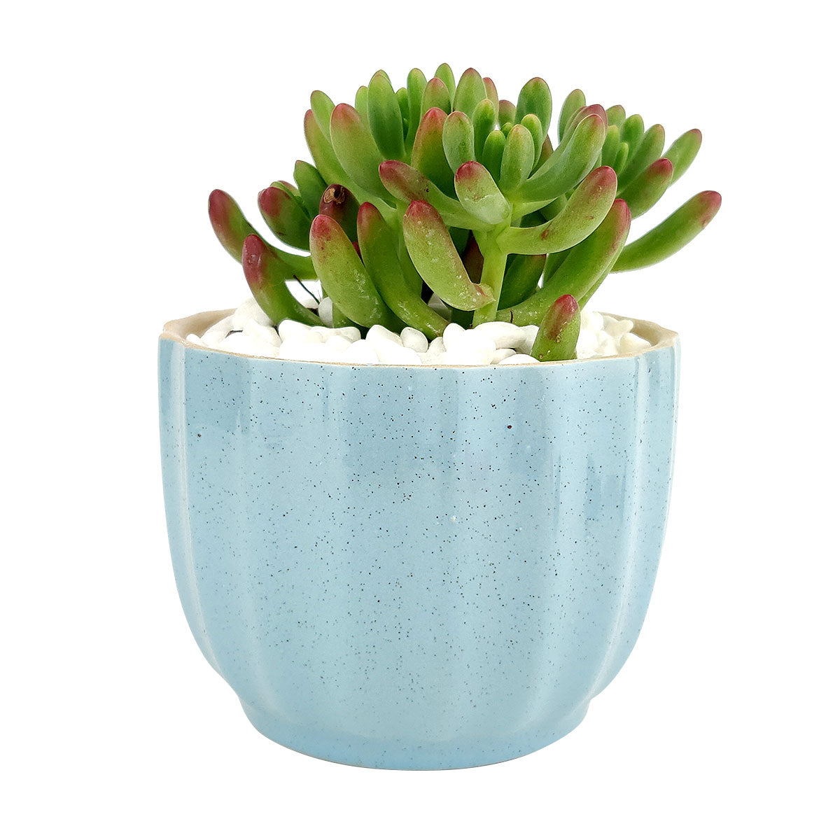 Blue Ripple Pot