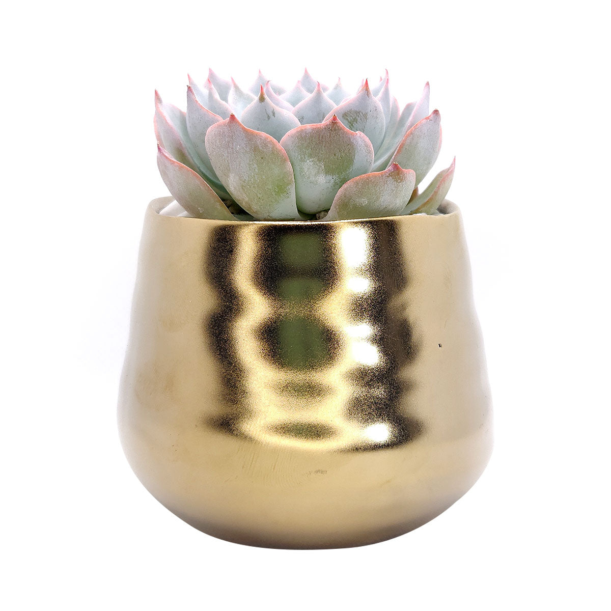 Matte Gold Ceramic Pot for sale, Succulent pot with rustic style for home decor, Small pot for succulent and cactus plant, Ceramic flower pot for sale