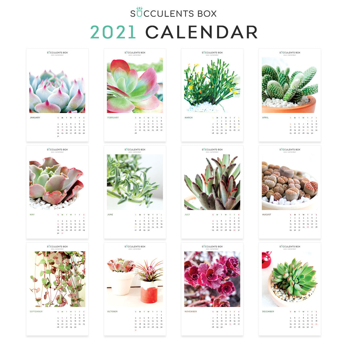 Succulent Calendar 2021, Printable Monthly Cactus and Succulents Calendar, Cute office calendar, Modern office calendar decor, 2021 Succulents Wall Calendar, Nature Themed Home, Office -Housewarming Gift