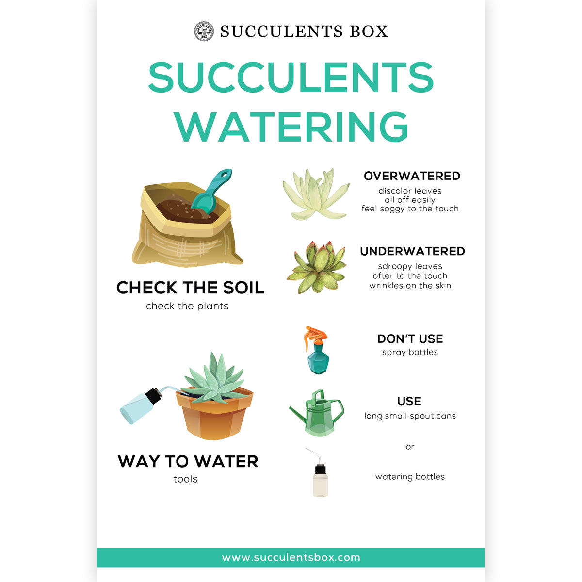 Succulents Watering Care Card for sale, How to water succulent plants, Succulent watering, How to care for succulent plant