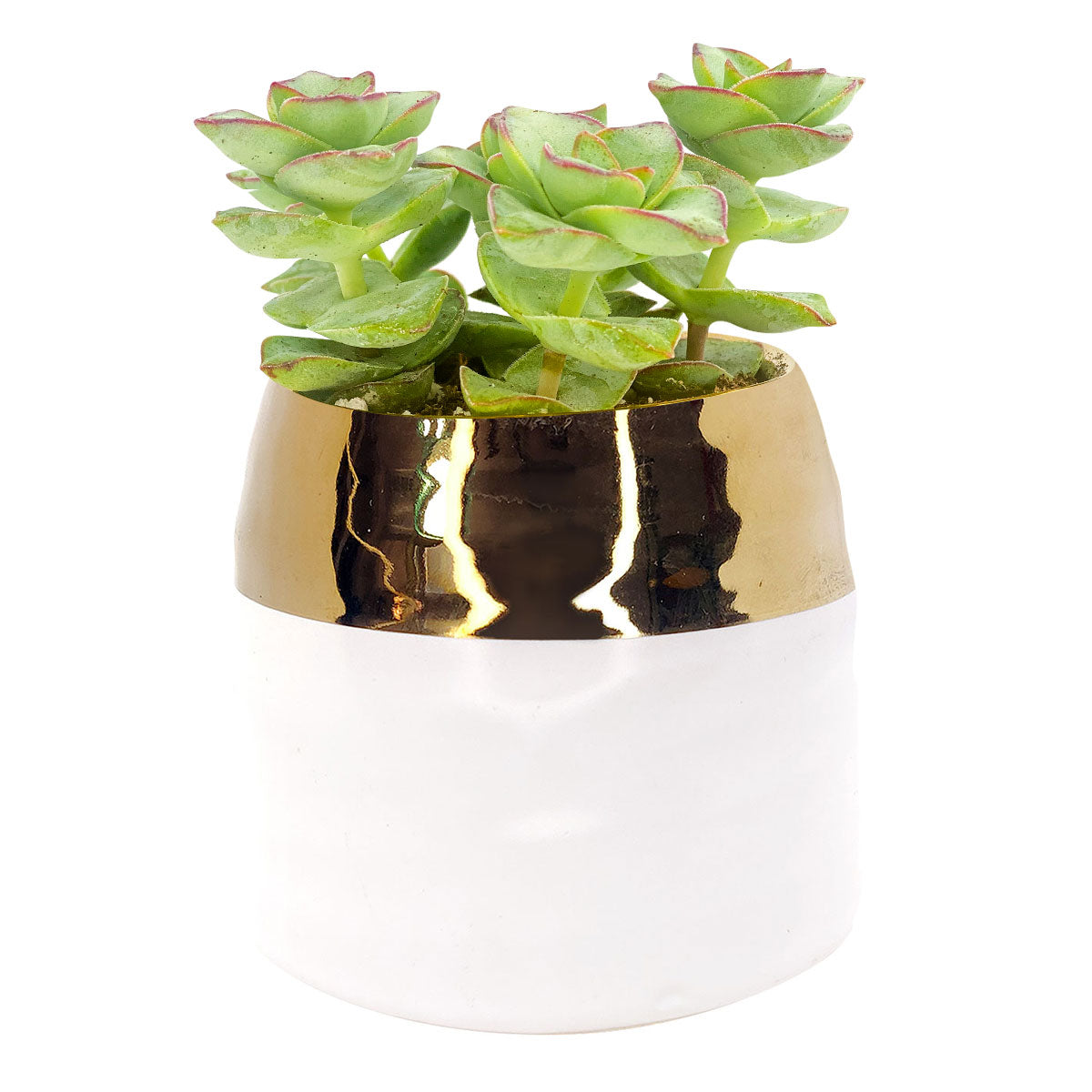 White Gold pot for sale, Claire pot for sale, unique pots for succulent and cactus, succulent pot decor, succulent pot gift ideas, Holiday decoration for sale