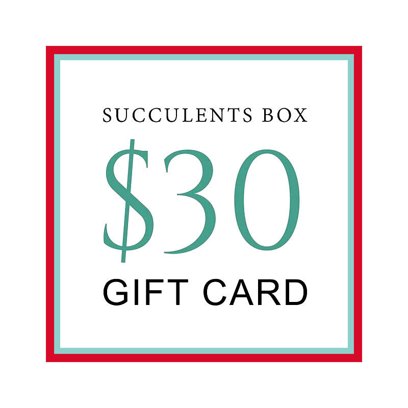 buy gift card online, black friday gift deals gift cards, buy gift card near me, best buy gift card, buy gift card discount, christmas gift card ideas, succulent gift card for any occasion, buy succulents for thanksgiving