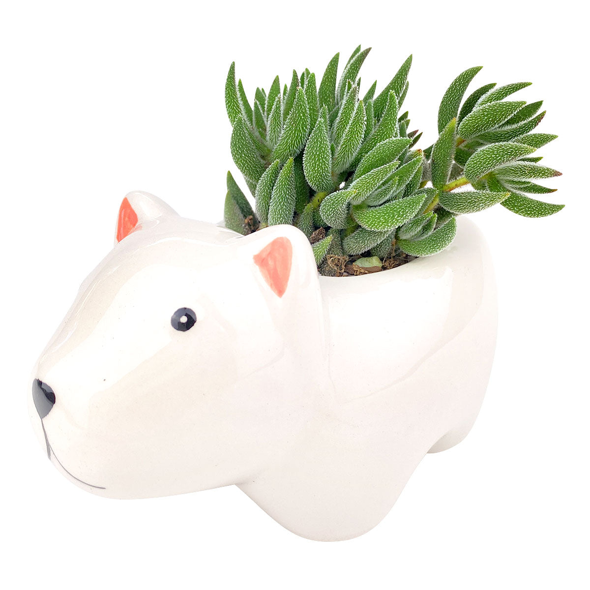 Ceramic Polar Bear Pot for sale, Cute Ceramic Succulent Pot, Polar Bear Planter Decor, Craft Supplies, Succulent Gift Ideas, Polar Bear Succulent Pot