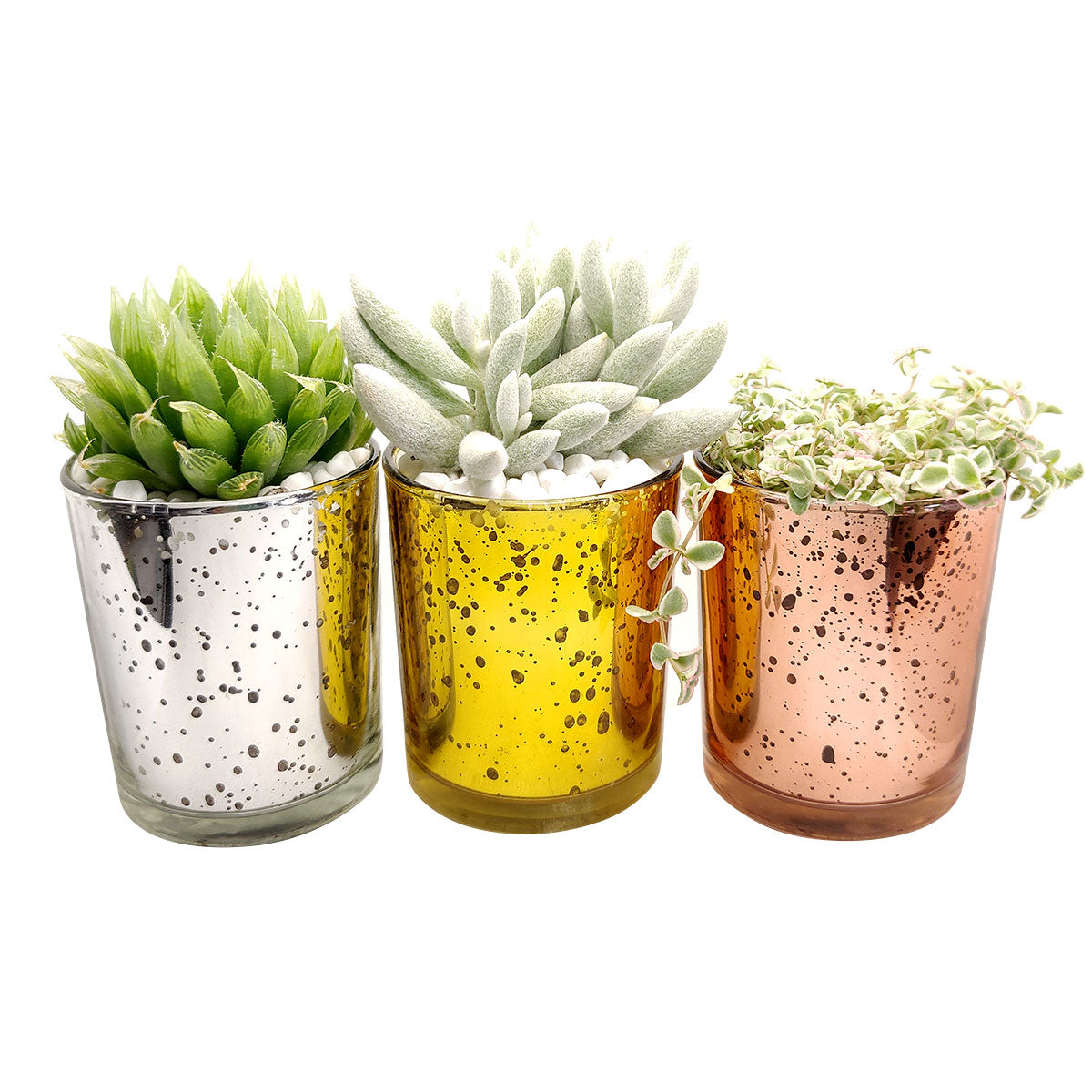 Pot for sale, Mini pot for succulent, Succulent pot decor ideas, Gold sparkly pot, Flower pot for sale, glass pots for planting, succulent gift for holiday
