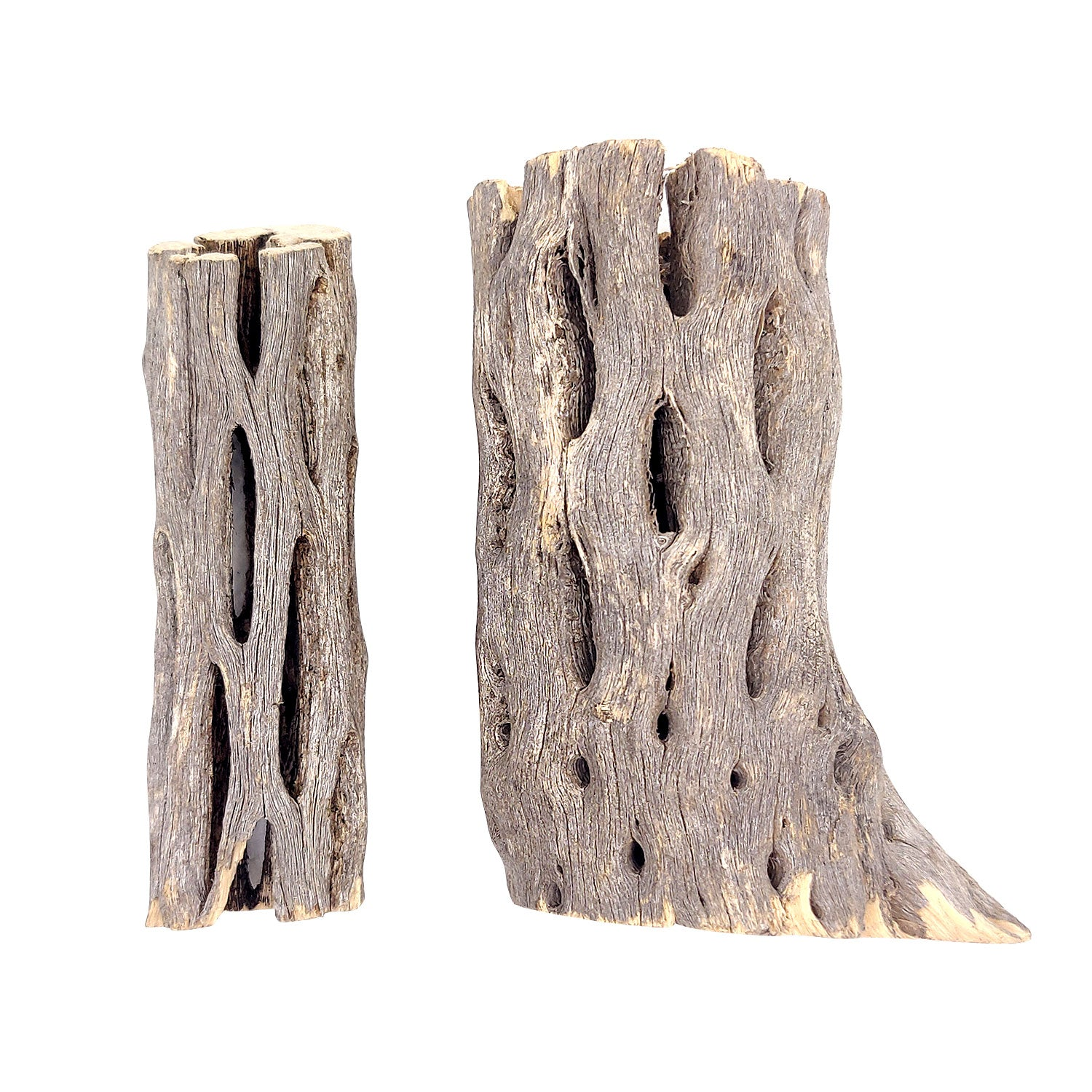 3 inch Staghorn Cholla Wood Pot for sale, Teddy Bear Cholla for Aquariums, Crafting, Air Plants, Natural cactus cholla wood, Home decor ideas, Air plant display, Air plant accessory for sale