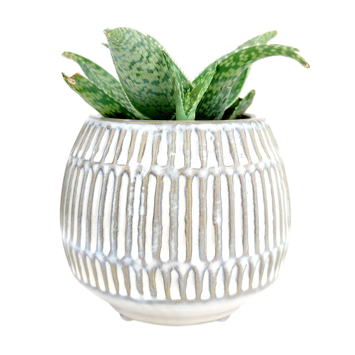 Round Texture Cream Pot for sale, White Ceramic Textured Planter Pot, Small ceramic pot for succulents and cacti, succulent home office decor ideas