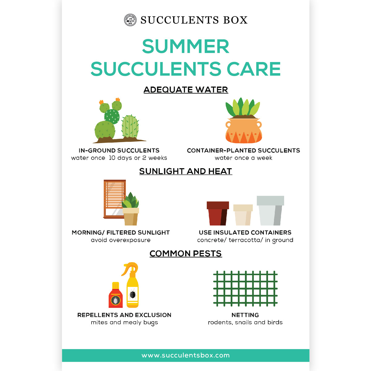 Summer Succulents Care Card for sale, How to care for succulents in summer, Succulent care instruction