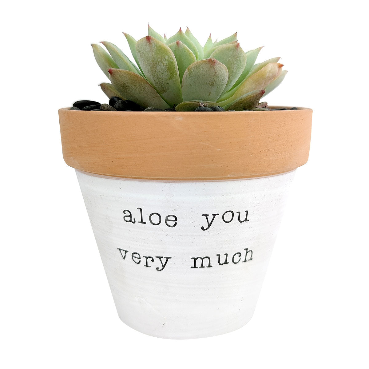 Aloe You Vera Much Pot for sale, Funny Planter, Plant with Pun, Terre cotta succulent and cactus pot, Mother's Day Gift, Gift for Mom, Indoor Planter, Gift for Plant Lovers