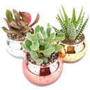 Pot for sale, Mini pot for succulent, Succulent pot decor ideas, Flower pot for sale, glass pots for planting, succulent gift for holiday, 3 Pack Round Glitter Pot