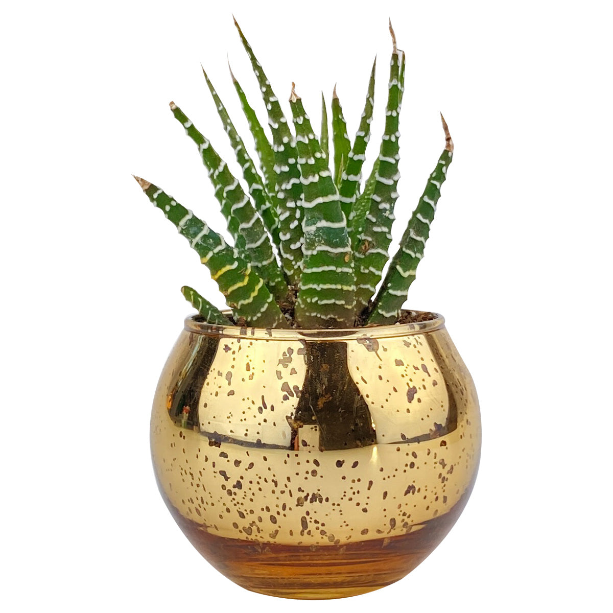 Pot for sale, Mini pot for succulent, Succulent pot decor ideas, Flower pot for sale, glass pots for planting, succulent gift for holiday, Round Gold Glitter Pot